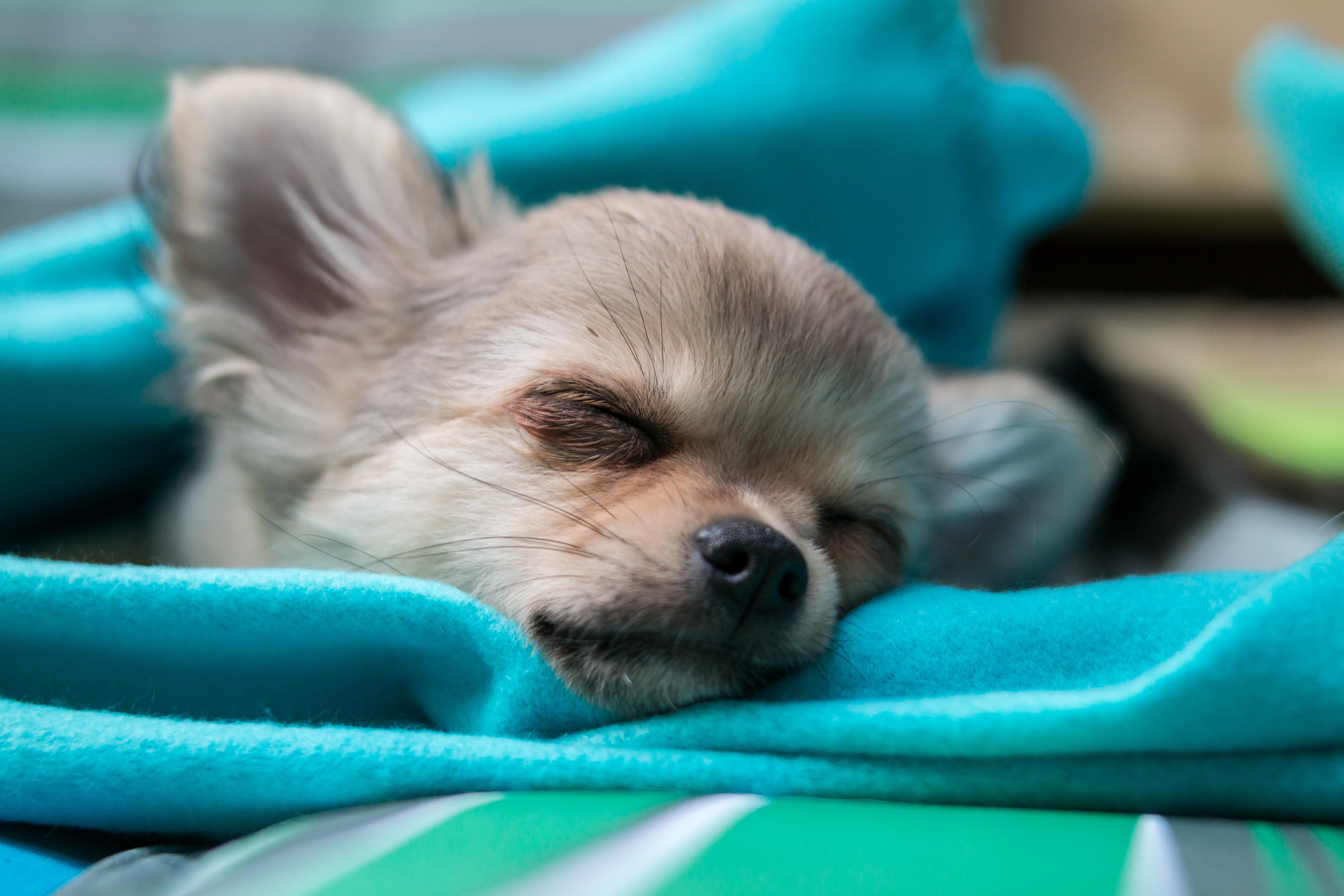 子犬の寝顔