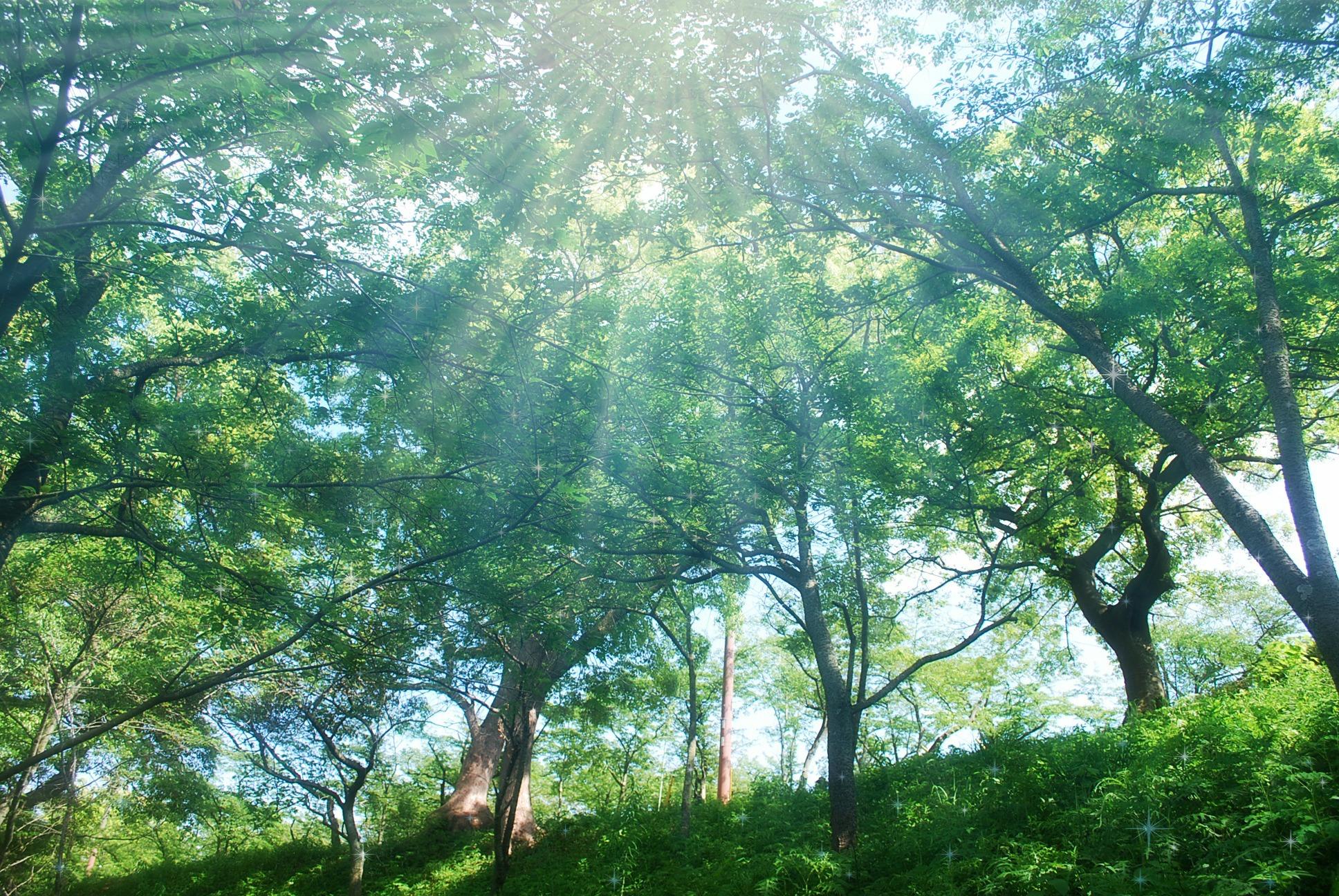 新緑の朝日